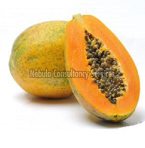 Fresh Indian Papaya