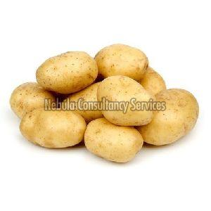 Fresh Indian Potato