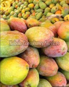 Fresh Kalmi Mango