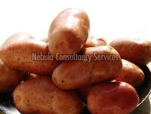 Fresh Lady Rosetta Potato
