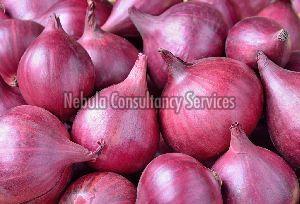 Fresh Natural Onion