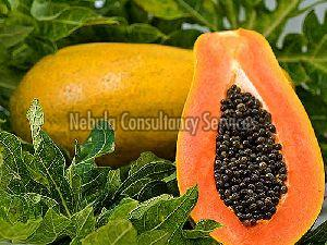 Fresh Natural Papaya