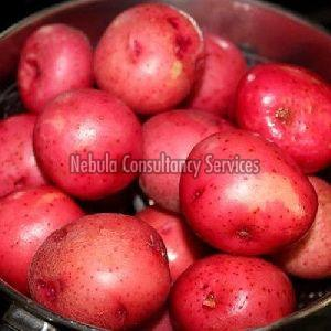 Fresh Red Potato