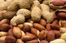 PEANUTS INDIAN GUJRAT PEANUT