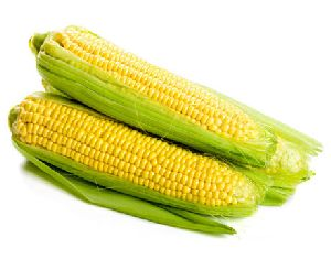Sweet Yellow Corn