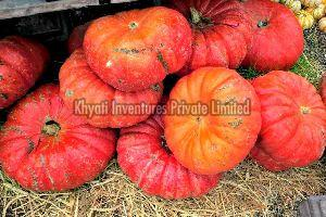 Fresh Red Pumpkin