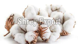 White Cotton Balls
