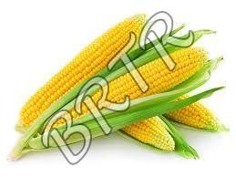Natural Whole Yellow Maize