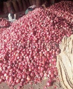Pink Natural Onion