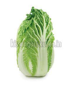 Fresh Napa Cabbage