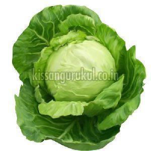 Organic Cabbage