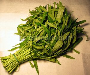 Water Spinach Leaves