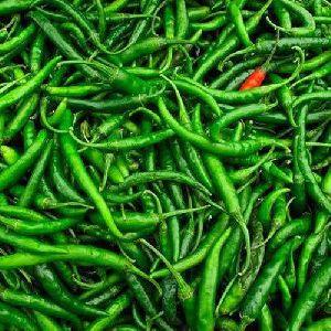 G4 Green Chili