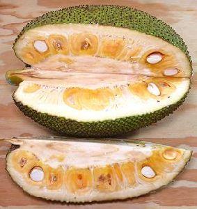 Fresh Organic  Jackfruit