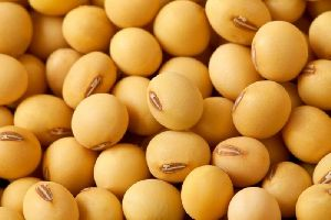 Soybean Seed 02