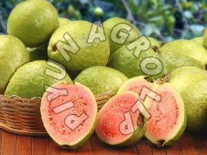 Red Guava
