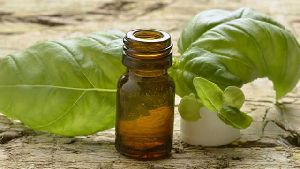 Pure Sweet Basil Oil