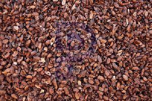 Cocoa Shell