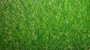 GAMT-0014 Cricket Synthetic Turf Rs. 65- sqft Synthetic Turf II quality