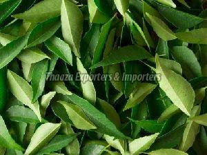 Natural Curry Leaves