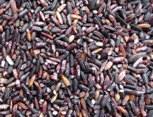 Natural Black Rice