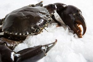 Frozen Mud Crab