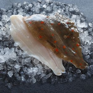 Frozen Plaice Fillet
