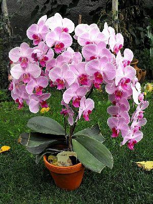 Artificial Orchid Flower Plant