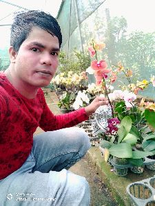 Artificial Orchids  Plant