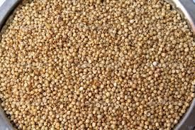 Fresh Sorghum Seeds
