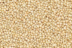 Organic Sorghum Seeds