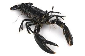 Black Lobster