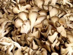 Dried Sajor Kaju Oyster Mushrooms