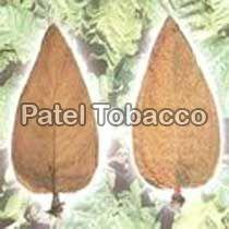 Tabacum tobacco