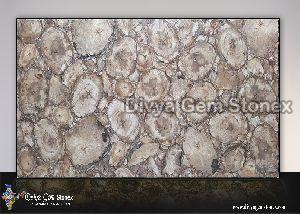 White Petrified Wood Slab