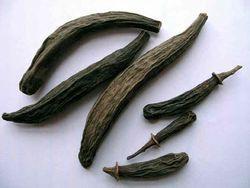 Kapok Buds