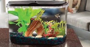 Bult Glass Aquarium