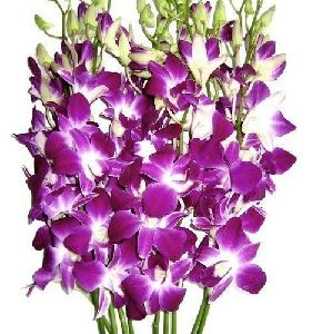 Fresh Orchid Flower