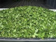 Natural Moringa Leaves Dried