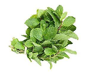 Green Mint Leaves
