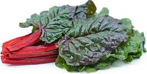Fresh Red Chard Leaves