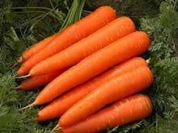 Fresh Organic Carrot