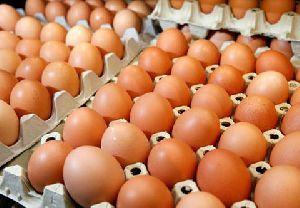 Desi Brown Eggs