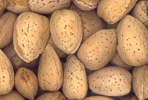 Hard Shelled Almonds