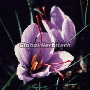 Crocus Sativus Tea