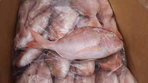 Frozen Sea Bream Fish