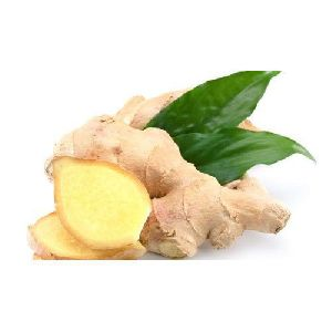 Fresh Natural Ginger