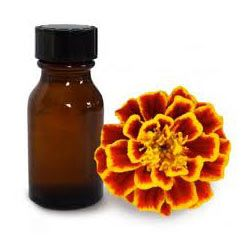 Tagetes Absolute Oil