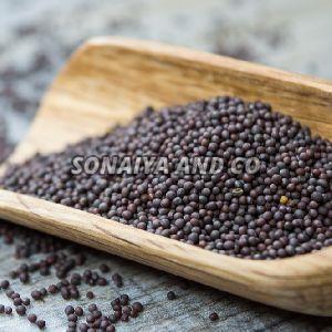 Dried Mustard Seeds