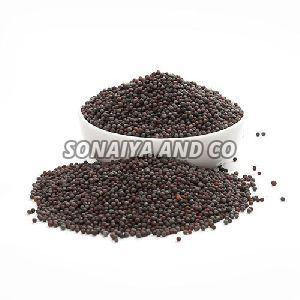 Raw Mustard Seeds